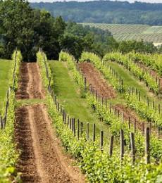 Le bio et le vin : un mariage de raison compliqué