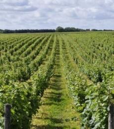 L'agriculture biologique française a connu une « année record » en 2018